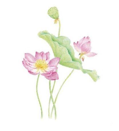 Vinyltryck Rosa Blommor